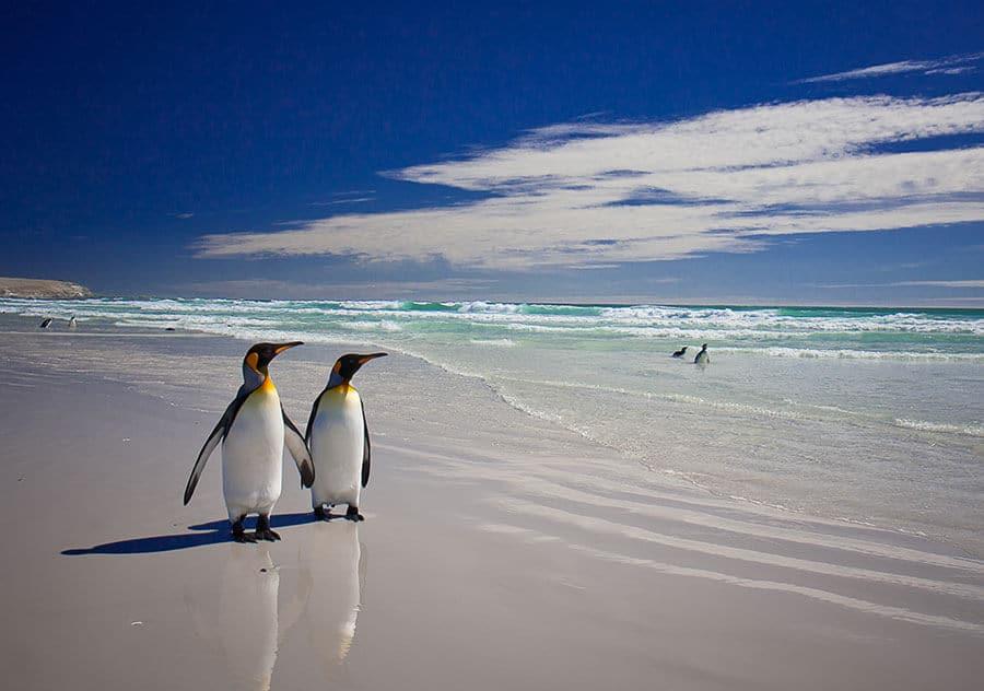 penguins - Colour It In