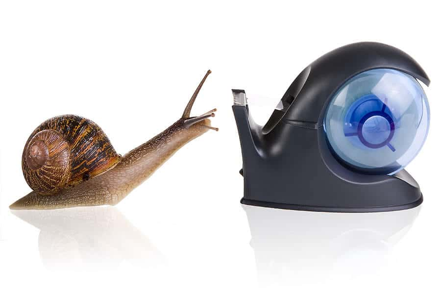 snail- Colour It In