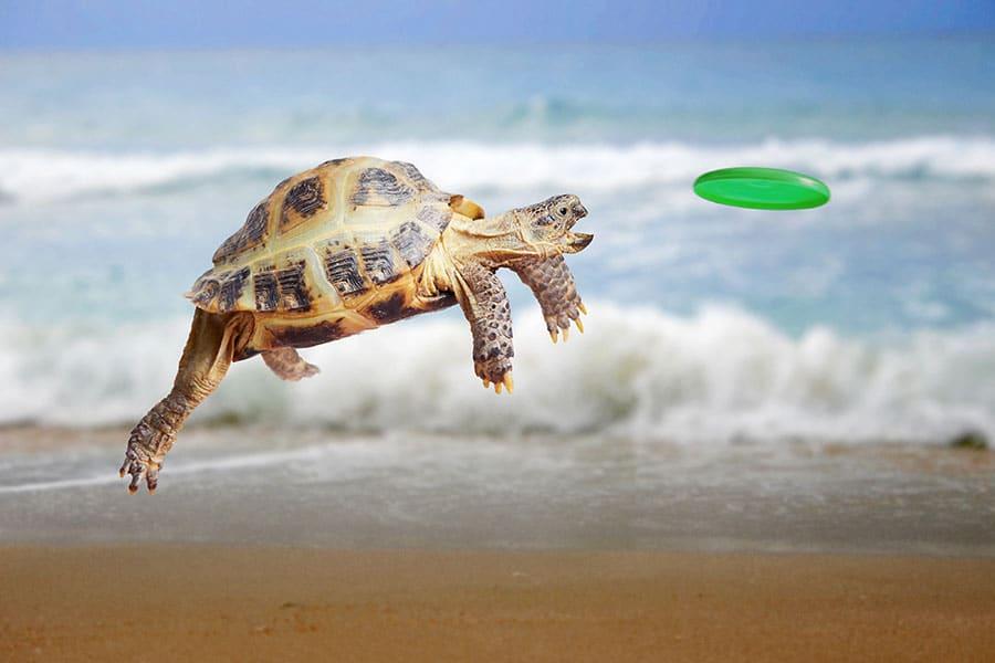 tortoise - Colour It In